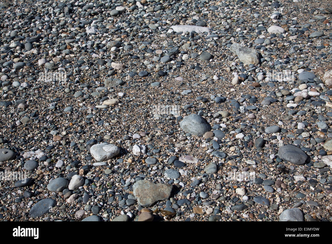 Pebbles and rocks on a stony beach at low tide among sand - Stock Image