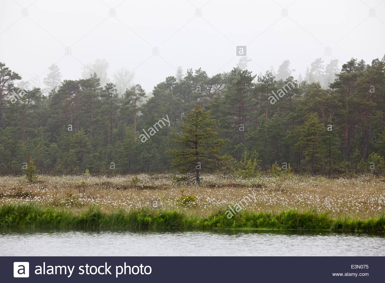 Hazy morning in recreational area - Stock Image