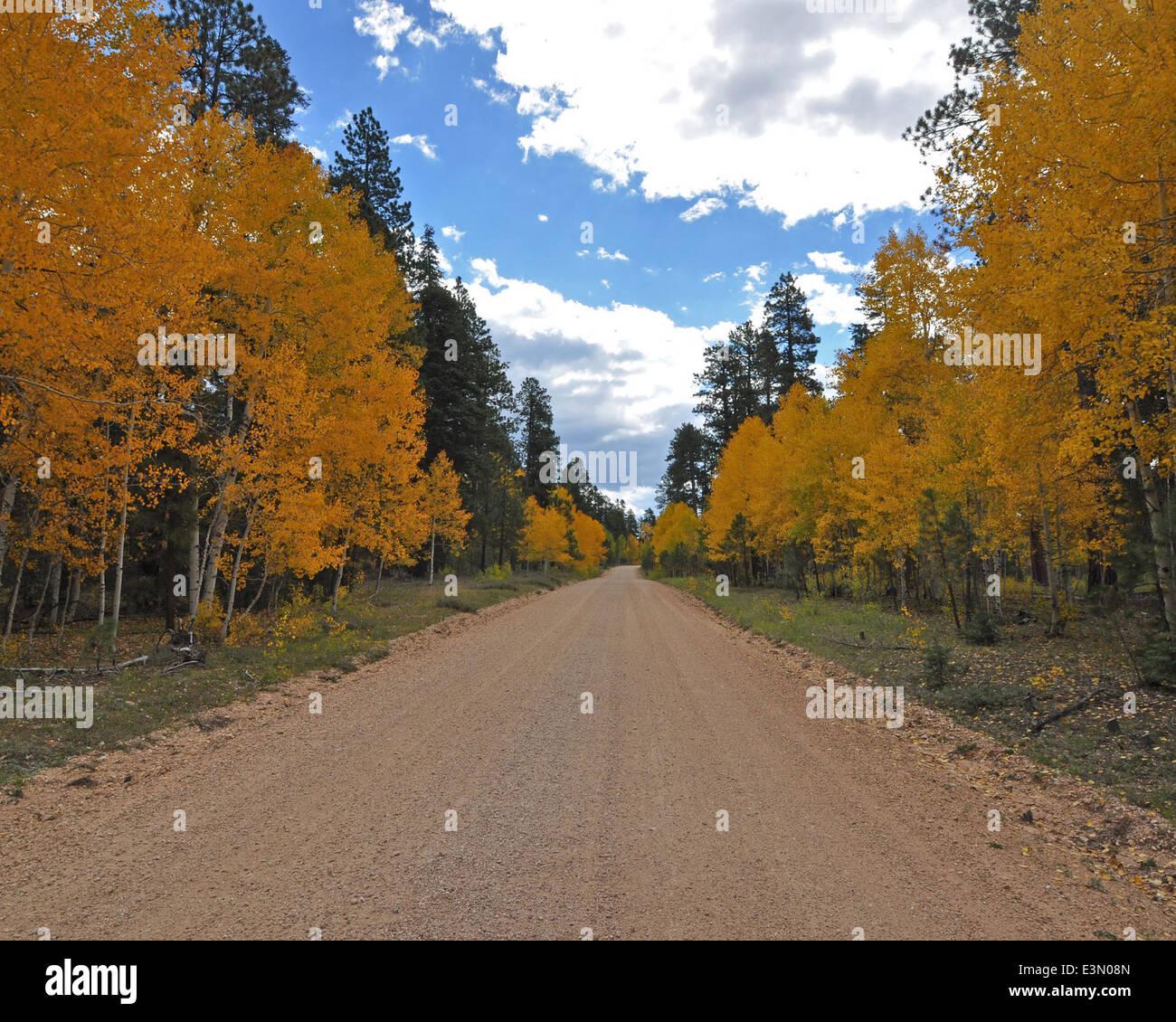 North Kaibab Fall Color - Stock Image
