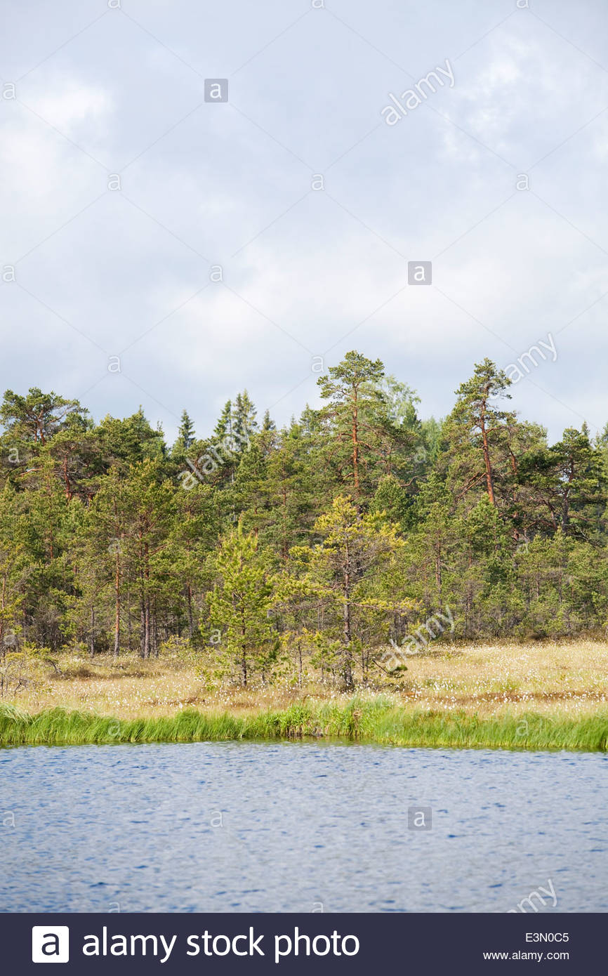 Lake in National Park - Stock Image