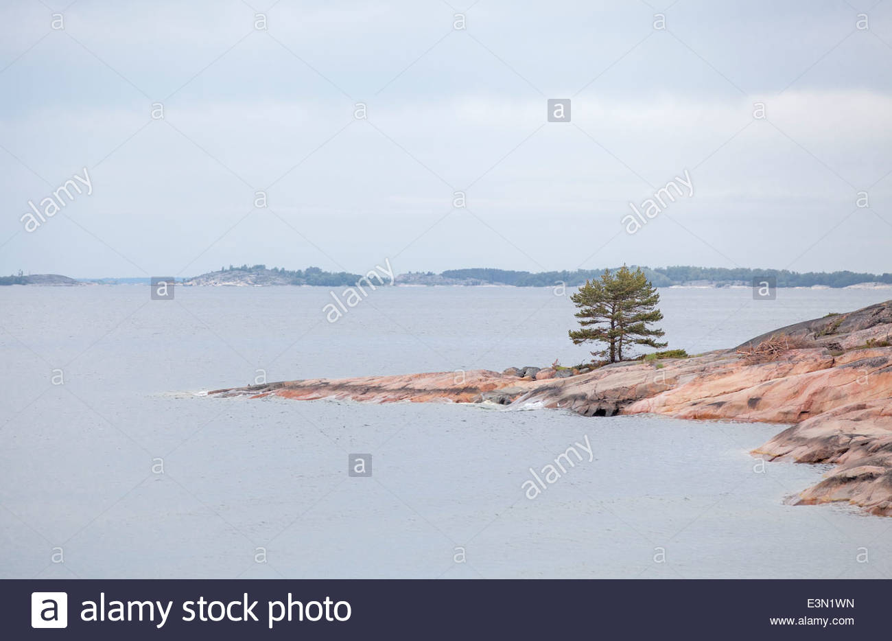 A lone pine tree by the sea - Stock Image
