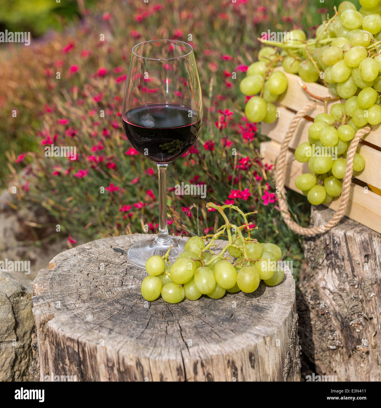 Glass of red wine with white grapes on a wooden block in the garden ...