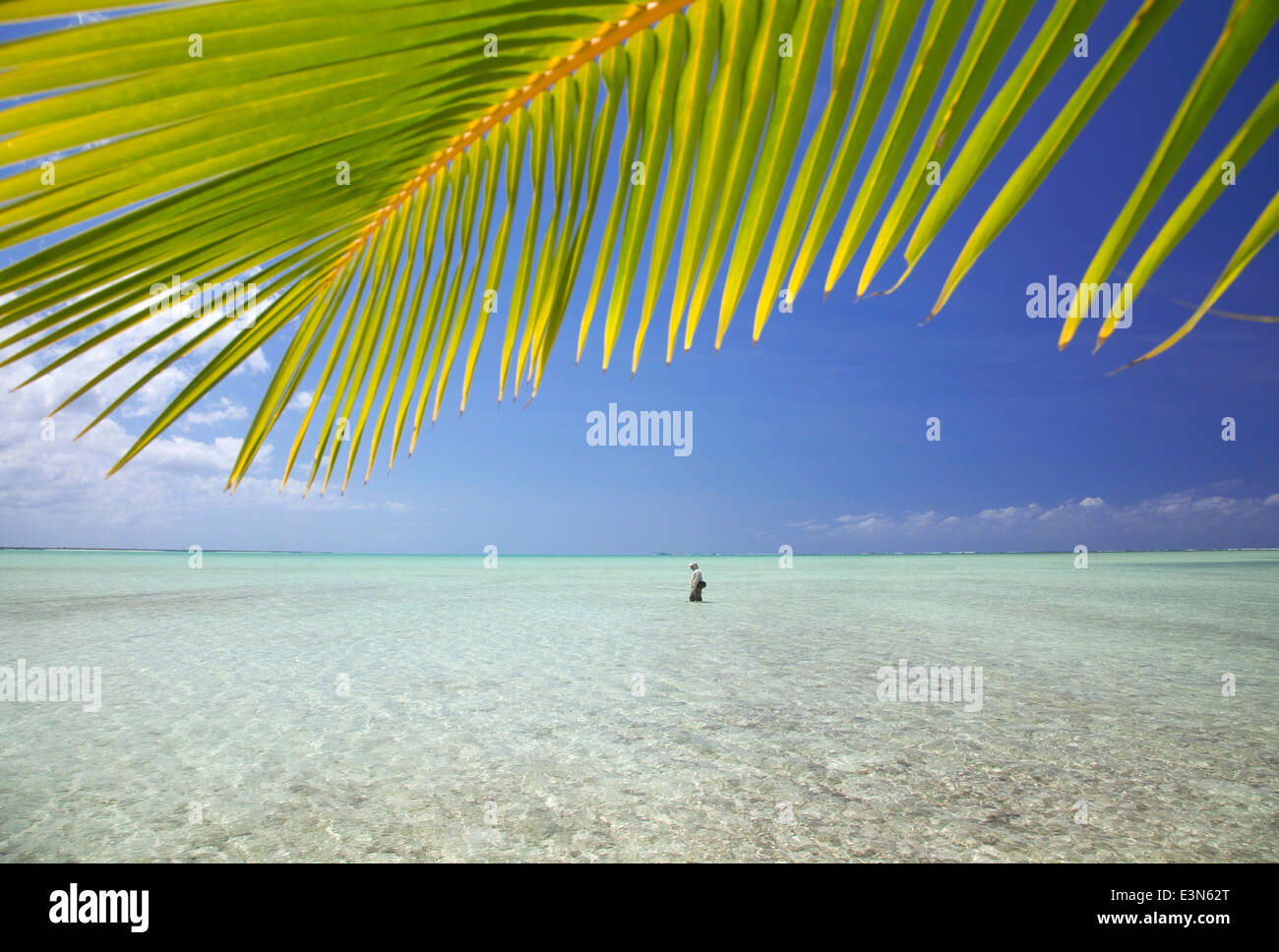 Man fly fishing for bonefish in the Bahamas - Stock Image