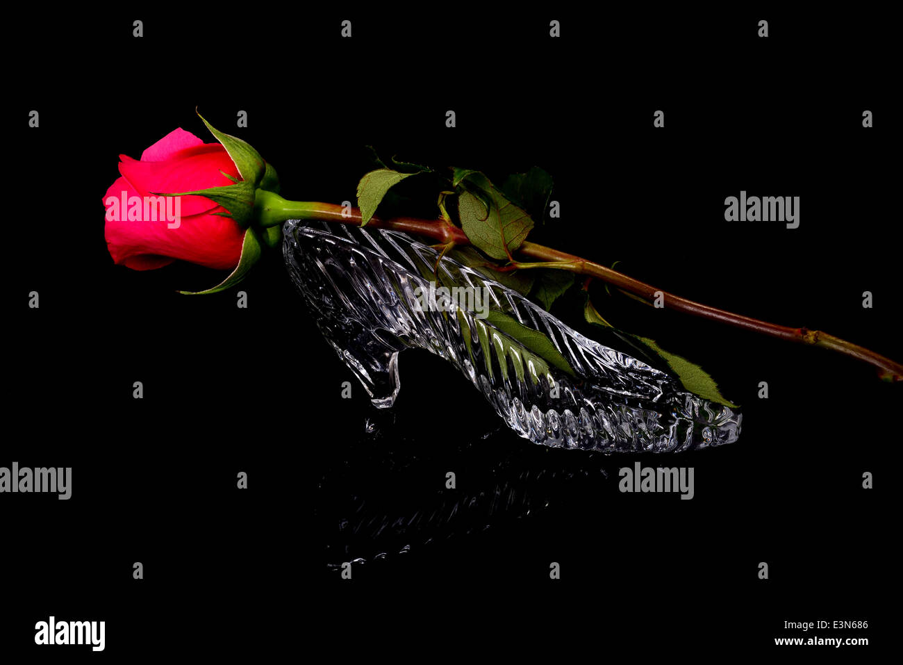 Glass slipper and Red rose isolated over a black background - Stock Image