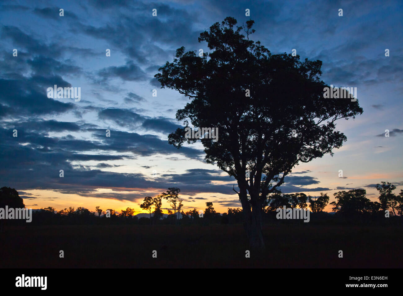 Sunrise silhouettes trees in the unique savanna ecosystem of KOH PHRA THONG ISLAND, THAILAND - Stock Image