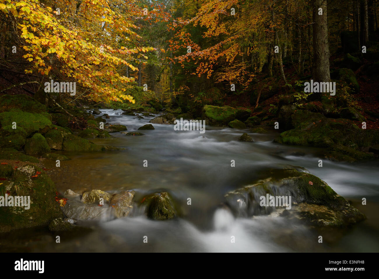 Forest with mountainstream and autumnal colors. - Stock Image