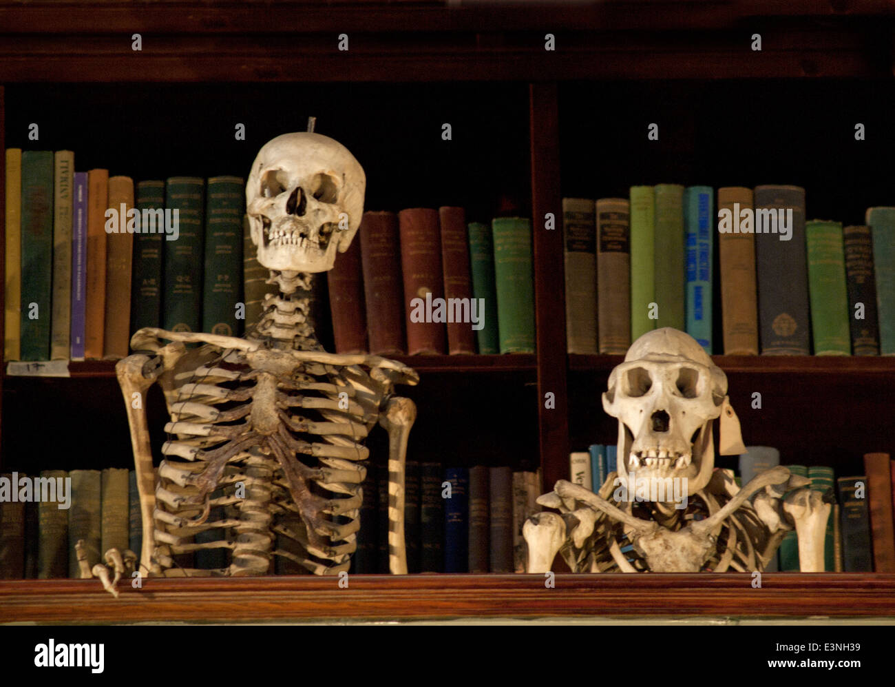 Grant Museum Of Zoology And Comparative Anatomy Stock Photos & Grant ...