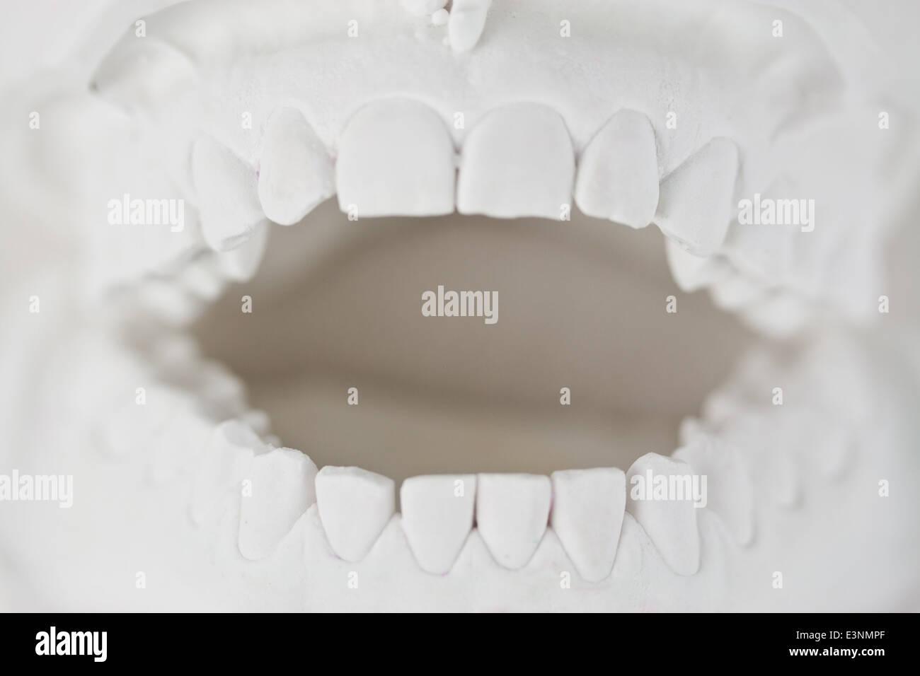 Zahnmodell - Stock Image