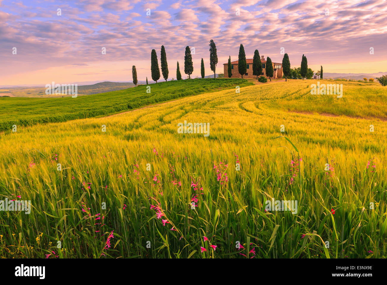 Podere I Cipressini with the famous Cypress trees in the heart of the Tuscany, near Pienza, Italy - Stock Image