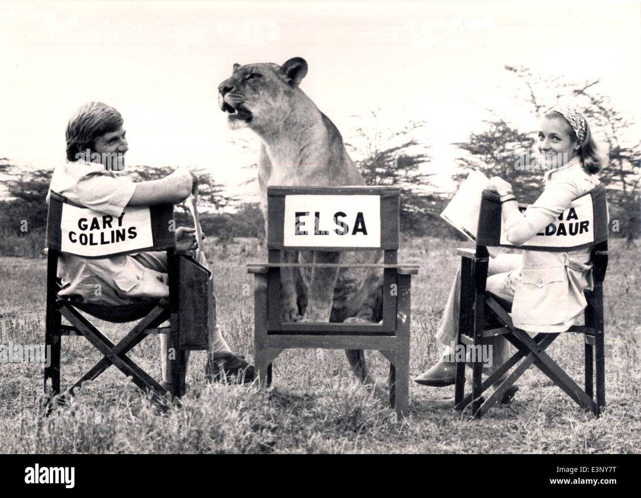 Three stars of  a TV version of 'Born Free', Elsa the lioness, Diana Muldaur as Joy Adamson and Gary Collins - Stock Image
