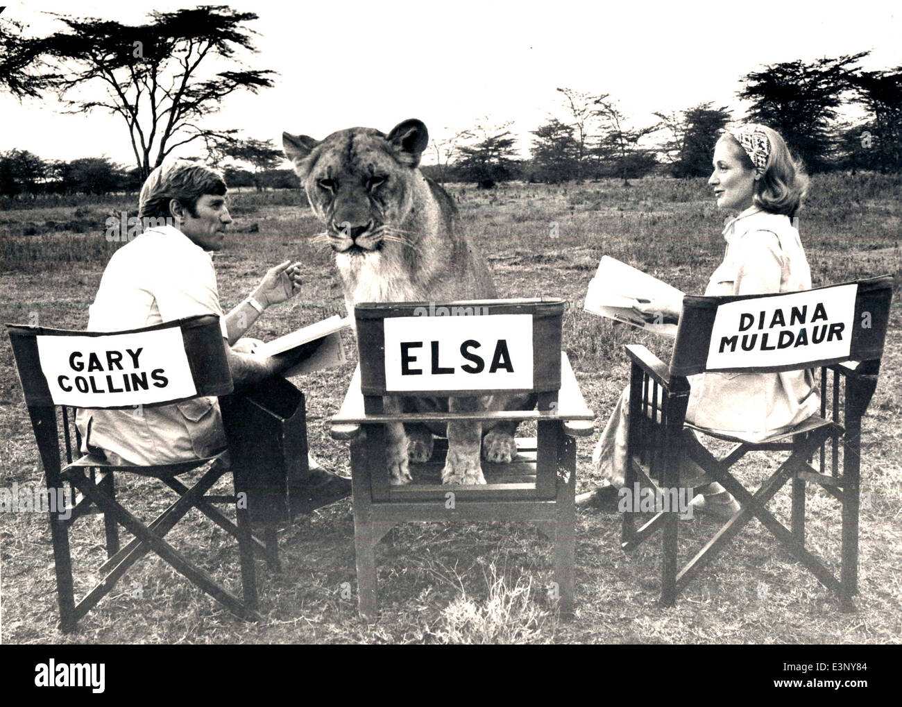 Three stars of  a TV version of 'Born Free', Elsa the lioness, Diana Muldaur as Joy Adamson and Gary Collins as Stock Photo