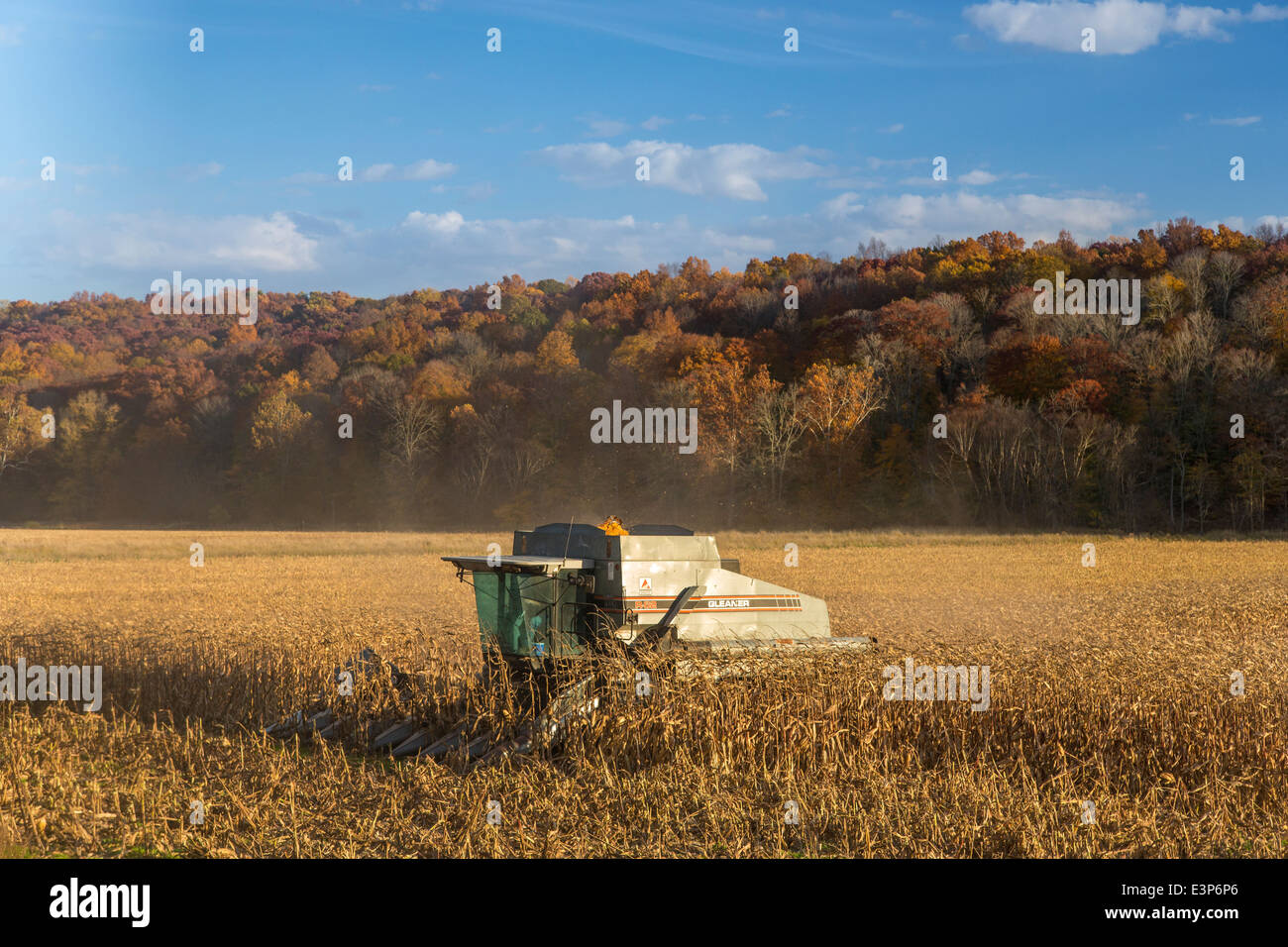 Corn harvest in Brown County, Indiana, USA - Stock Image