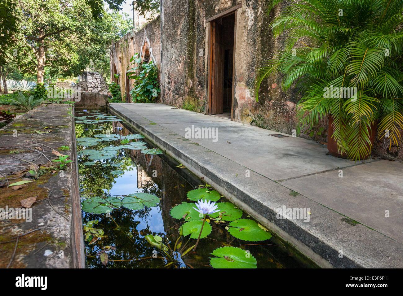 Water lilies on a pond at San Pedro Ochil hacienda in Yucatan, Mexico. - Stock Image