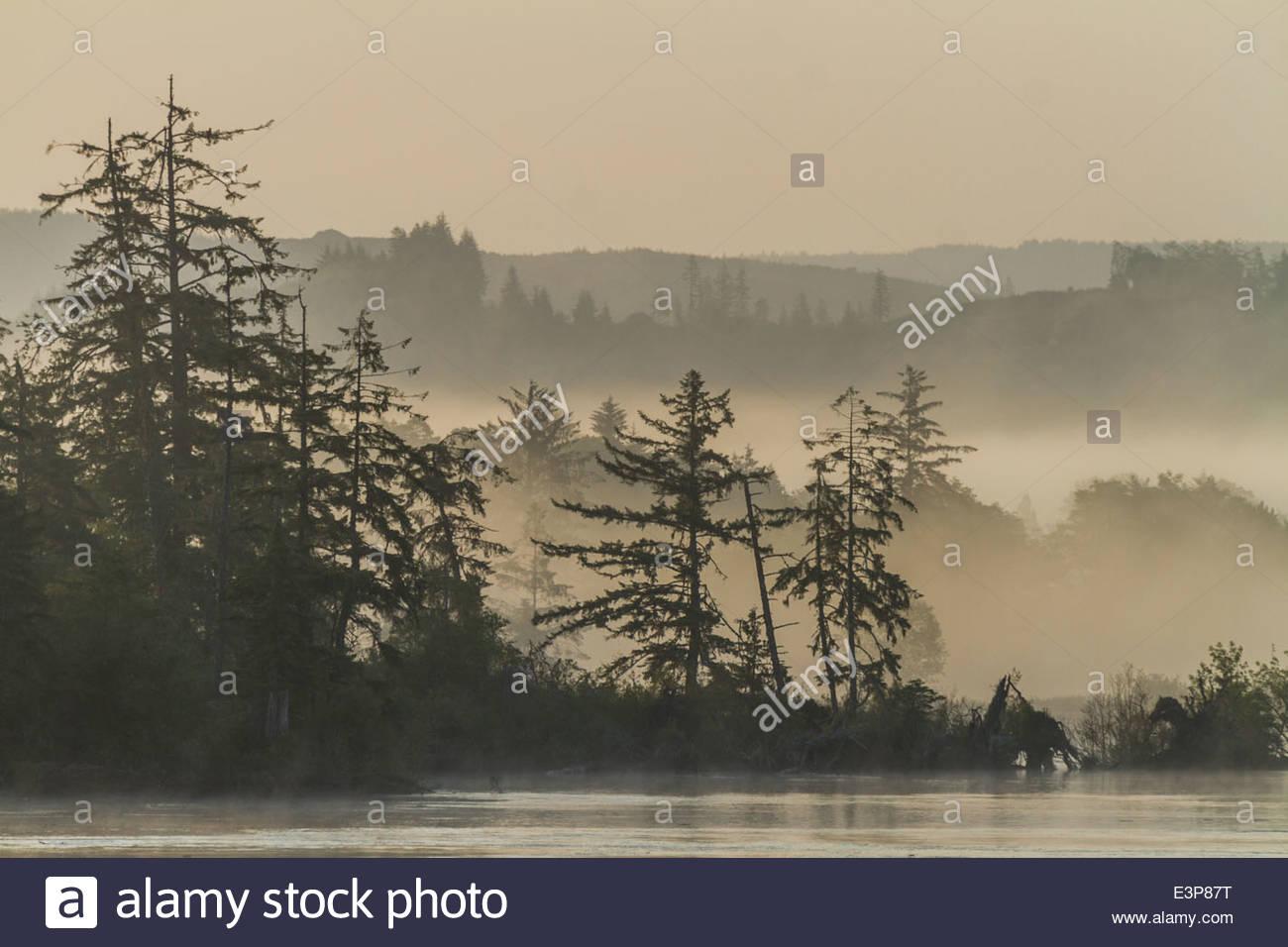 Morning Sunlight Illuminates Layers Of Fog, River & Trees Of The Columbia River & Washington State, USA - Stock Image