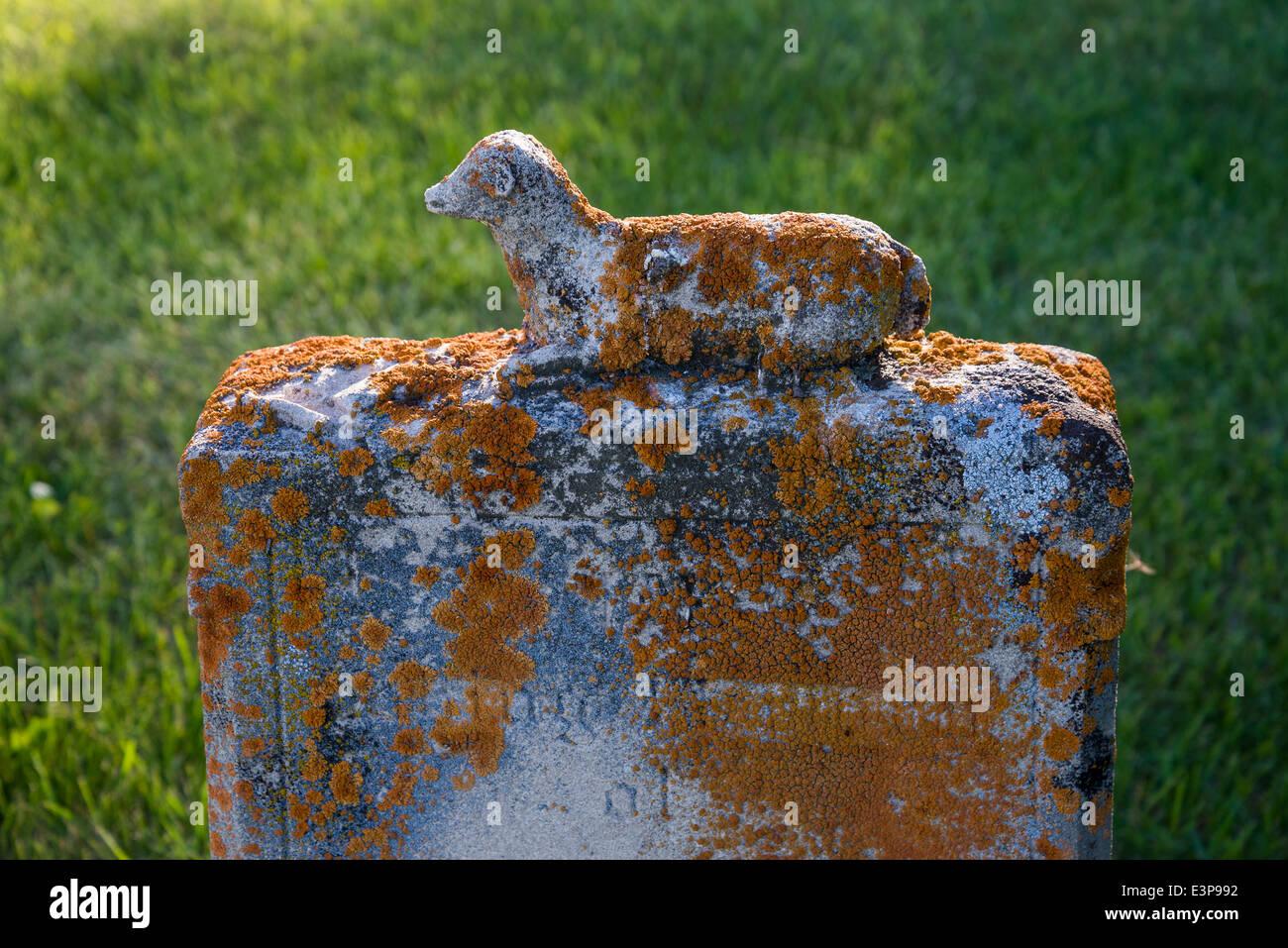 Lichen covered child's gravestone with lamb, Calgary, Alberta, Canada - Stock Image