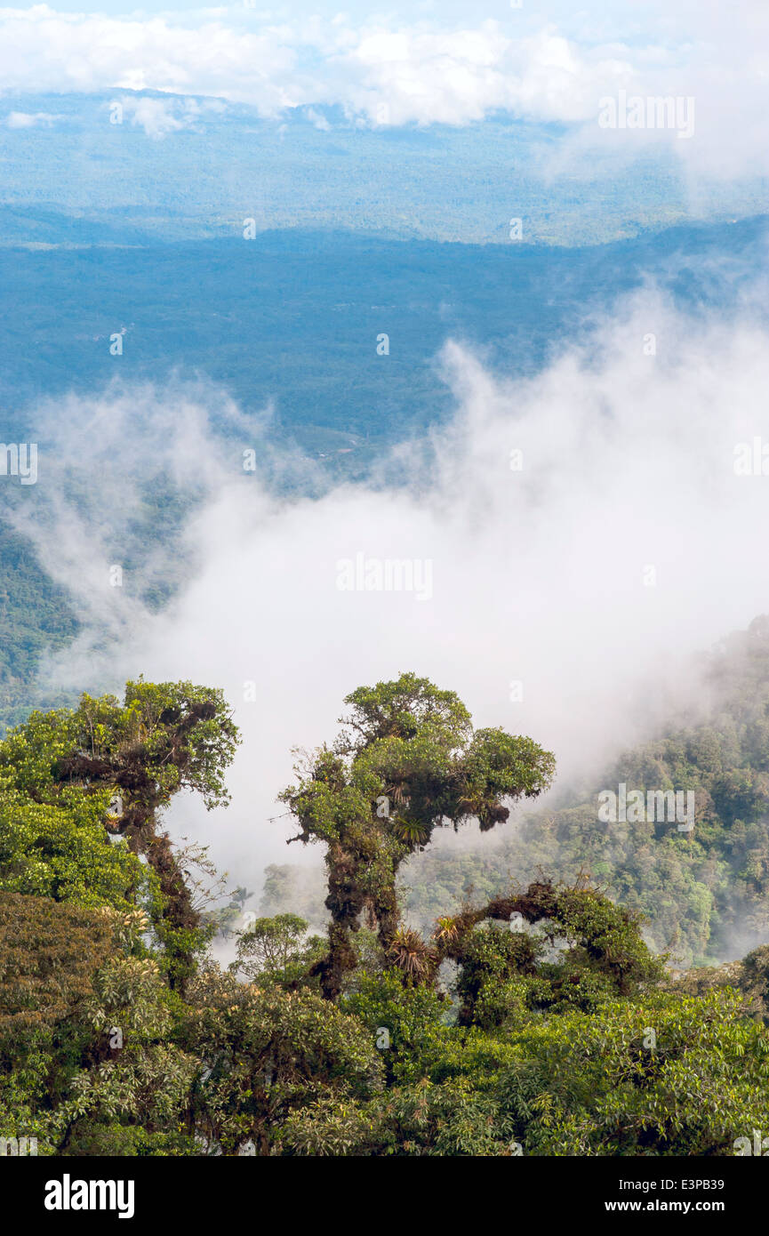 From Andes to Amazon, View of the tropical rainforest, Ecuador - Stock Image