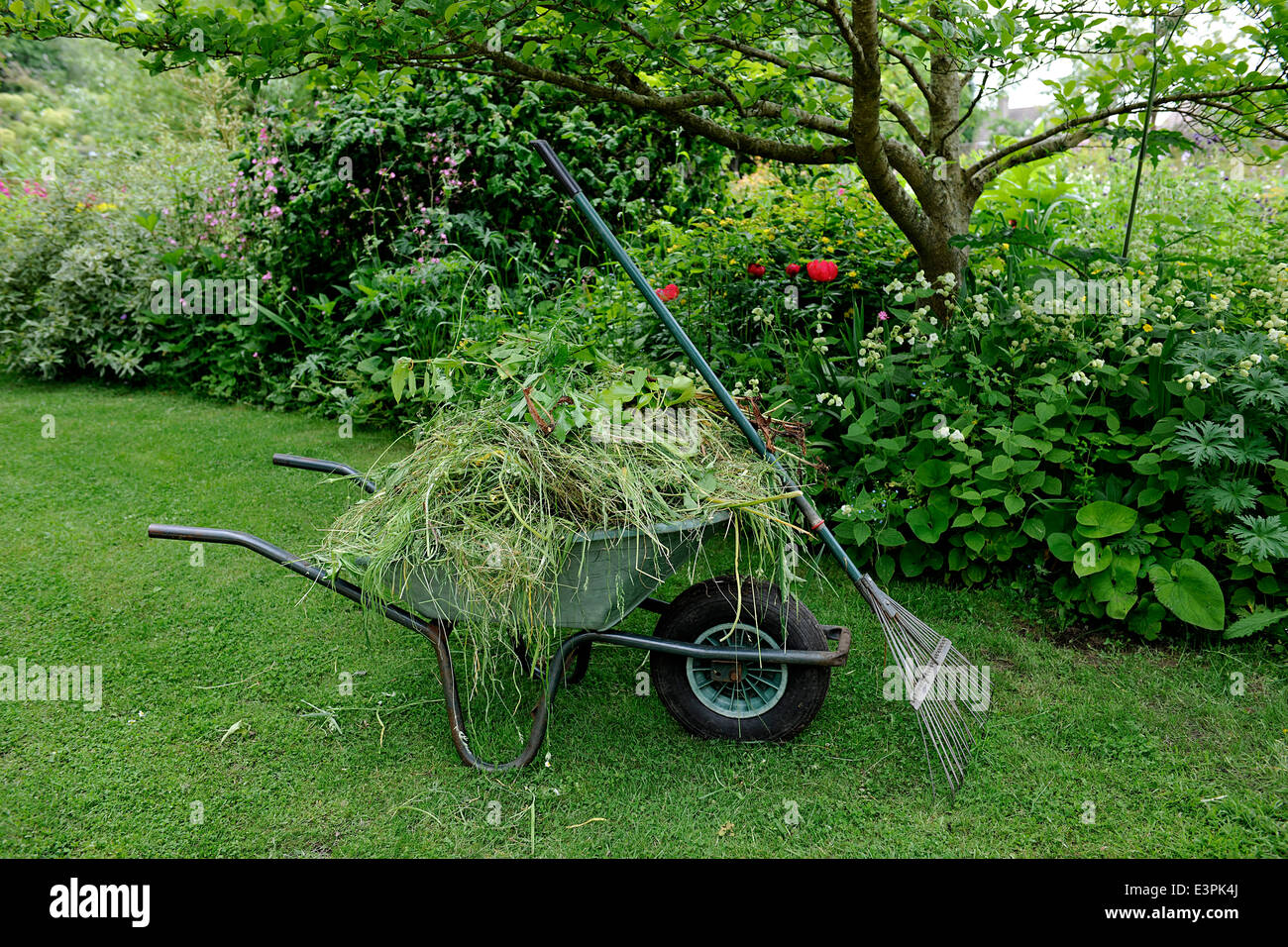 Wheelbarrow in English Garden at East Lambrook Manor Gardens, South Petherton, Somerset designed by Margery Fish - Stock Image