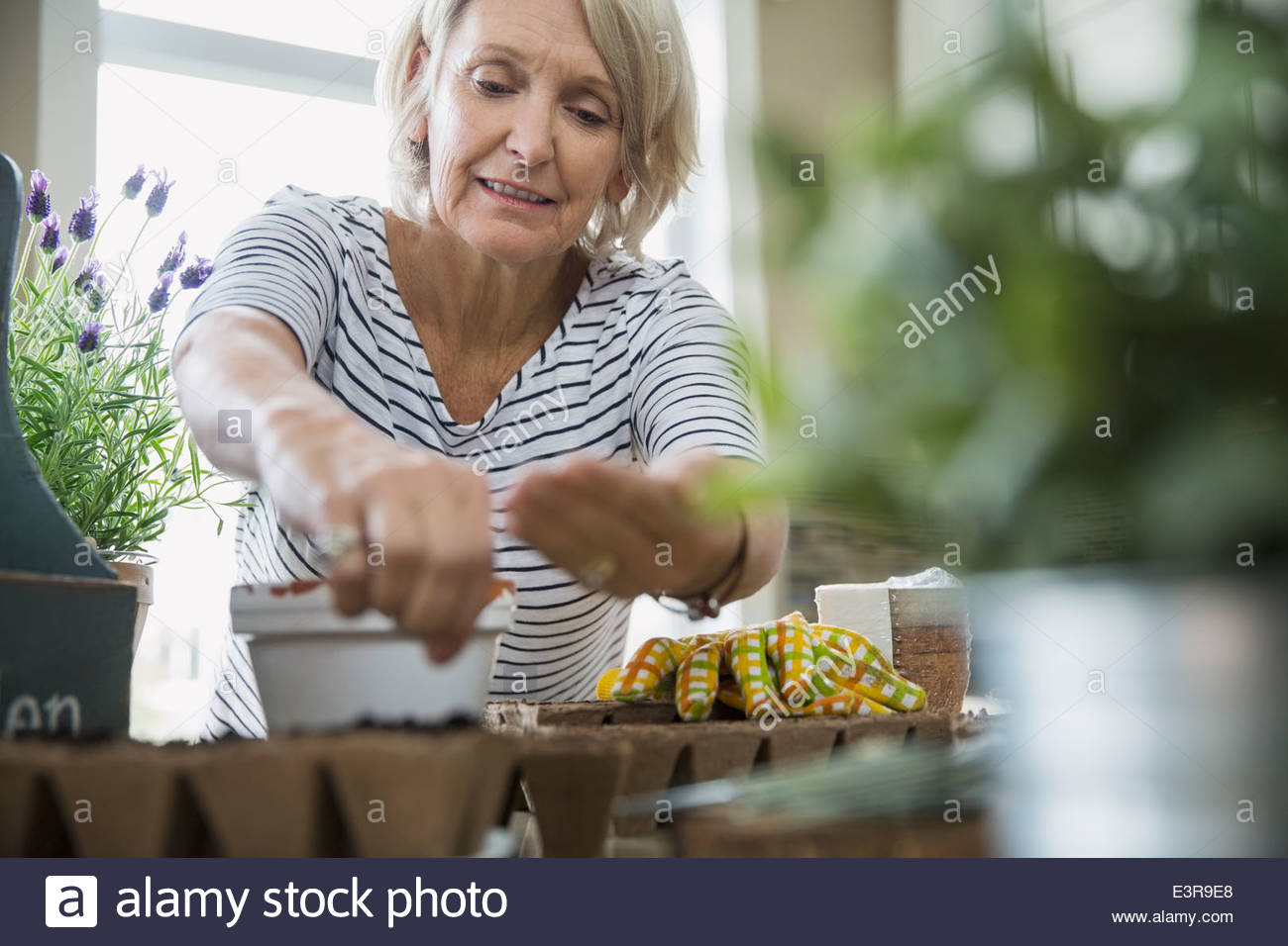 Woman planting seeds - Stock Image