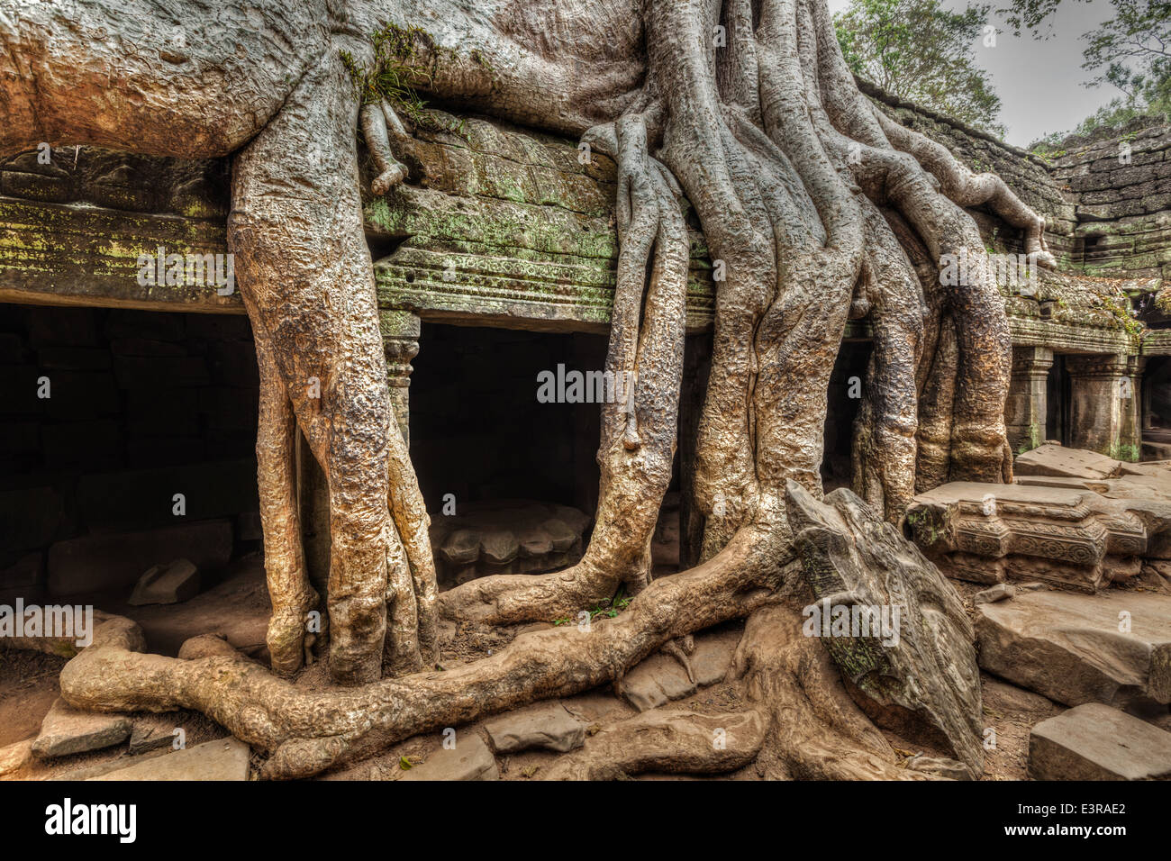 High dynamic range (hdr) image of ancient ruins with tree roots, Ta Prohm temple ruins, Angkor, Cambodia - Stock Image
