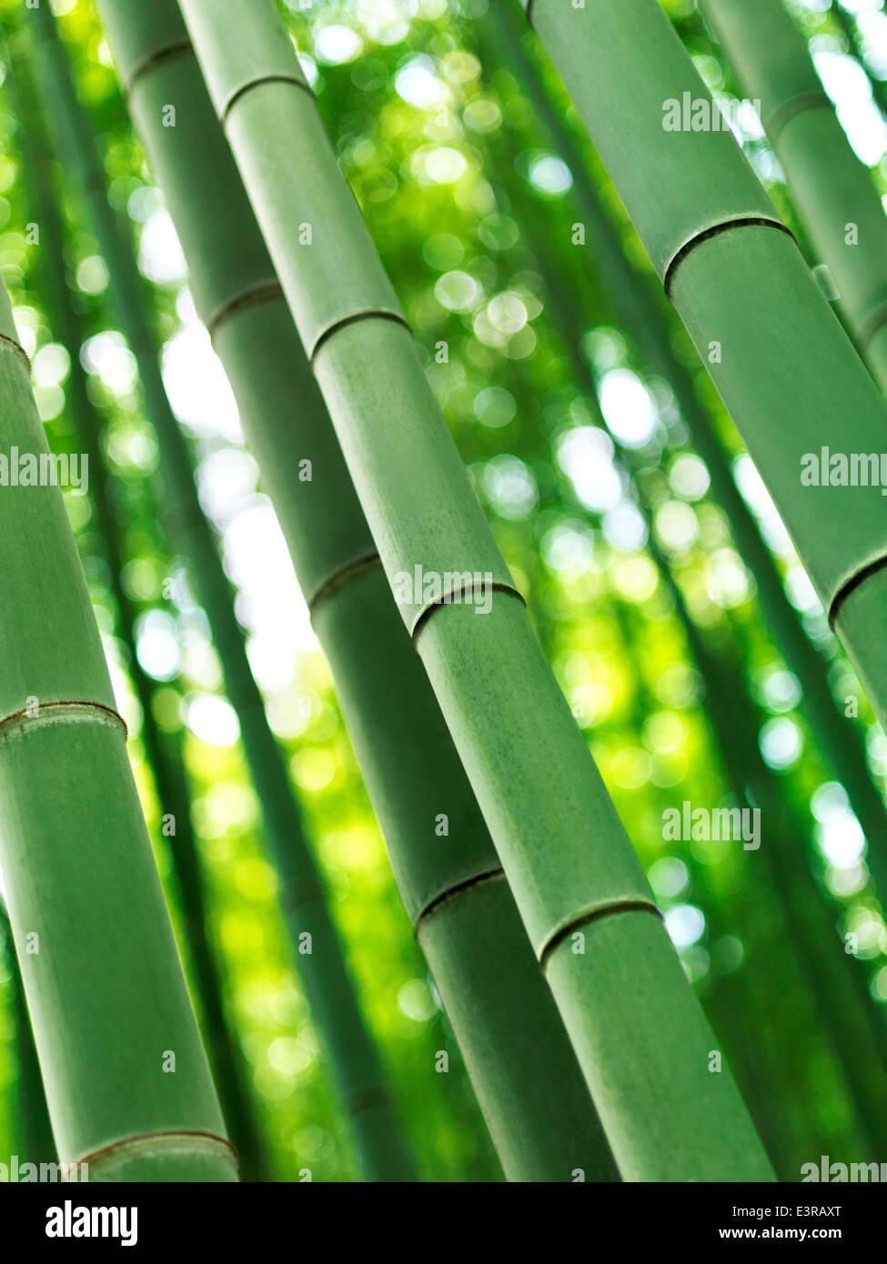 Bamboo forest closeup of stems at Arashiyama bamboo forest, Kyoto, Japan. - Stock Image