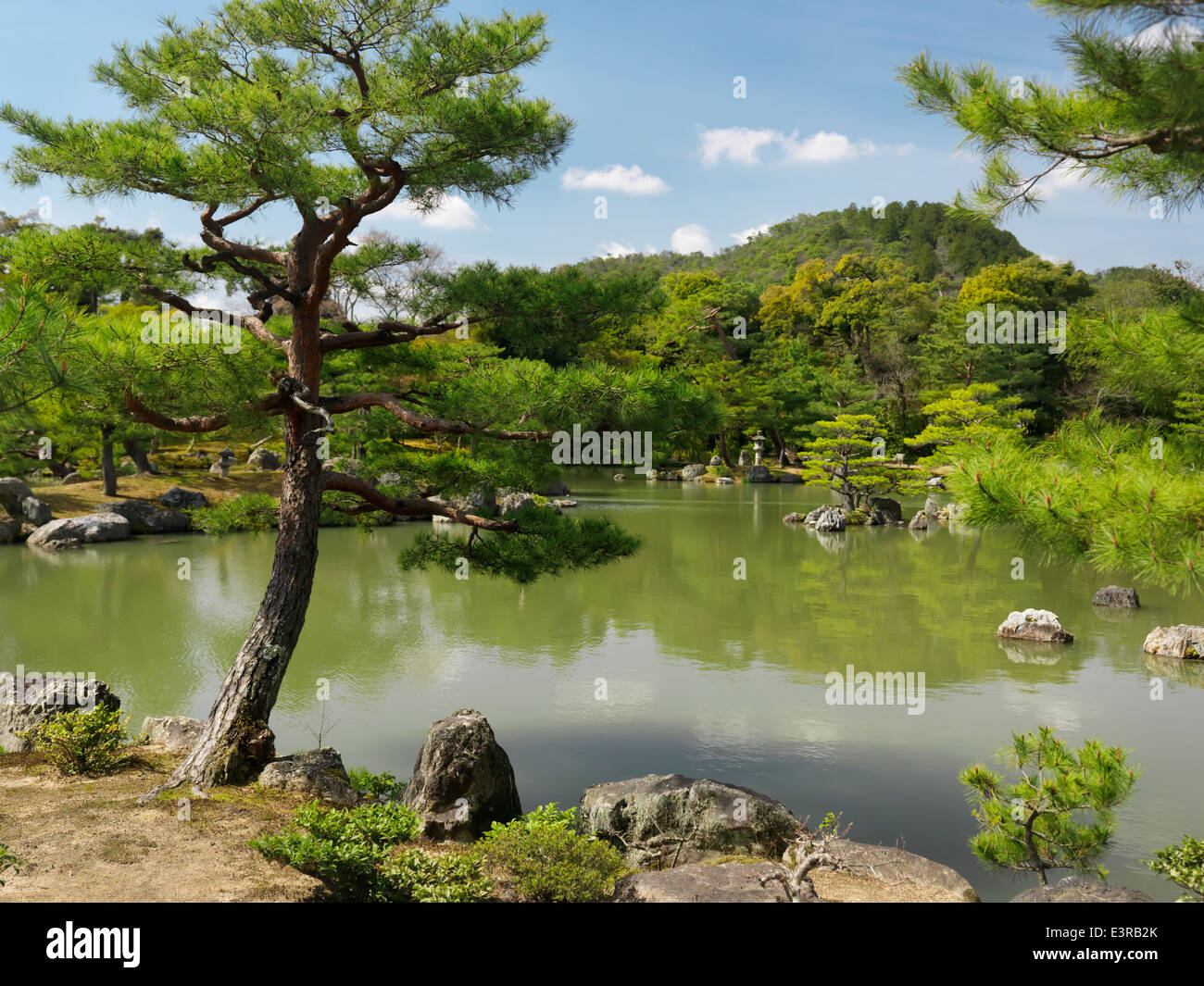 Pine trees at Japanese garden with a pond in Kyoto, Japan - Stock Image