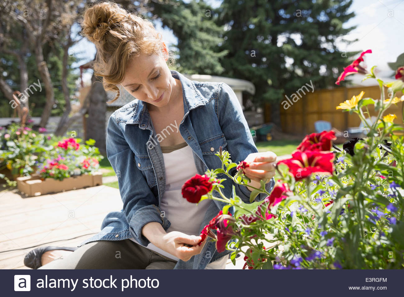 Woman touching flowers in garden - Stock Image