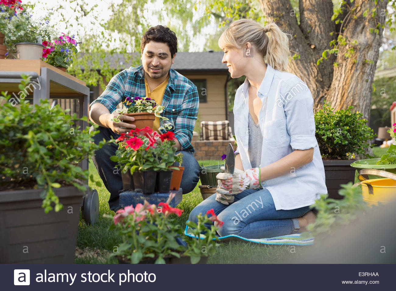 Couple planting flowers in garden - Stock Image