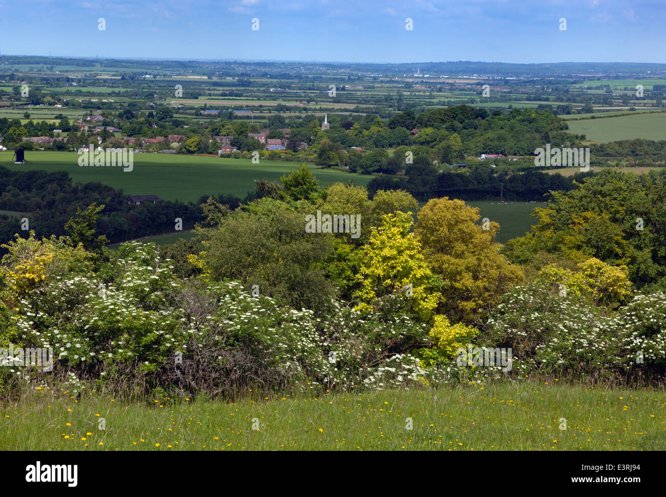 On the Ridgeway path Chiltern Downland towards Ivinghoe Bucks UK June - Stock Image