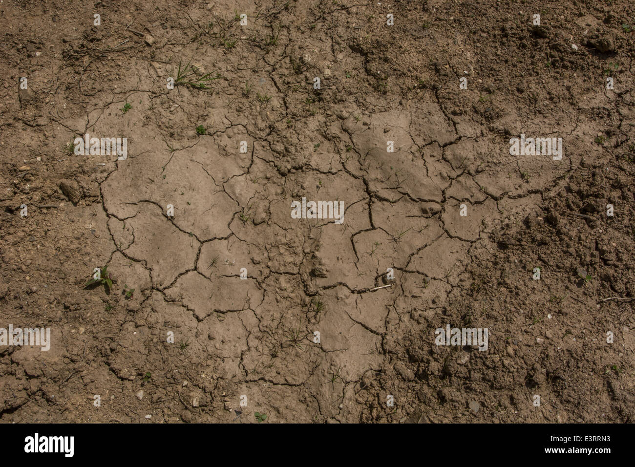 UK drought / Signs of pending water shortage as mud cracks in the heat. Heatwave crops metaphor, water crisis. - Stock Image