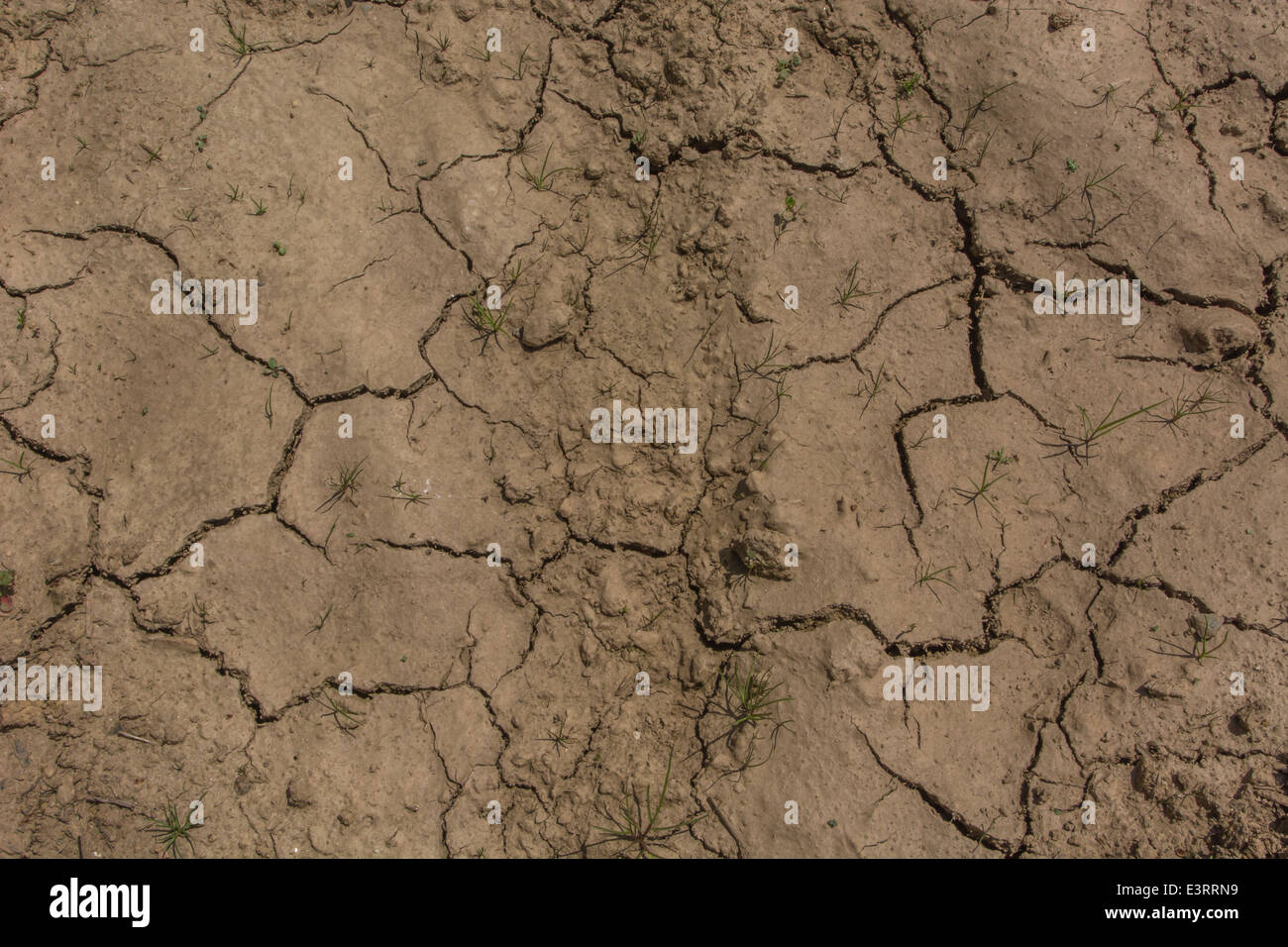 UK drought / Signs of pending water shortage as mud cracks in the heat. Metaphor for heatwave concept, heatwave - Stock Image