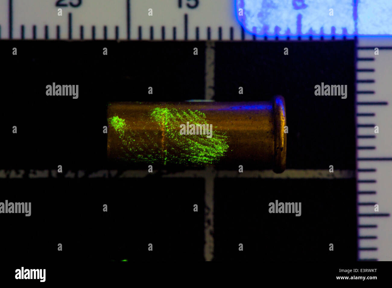 Florescence dyed enhanced fingerprint ridge detail on .22 ammunition casing illuminated with ultraviolet light - Stock Image
