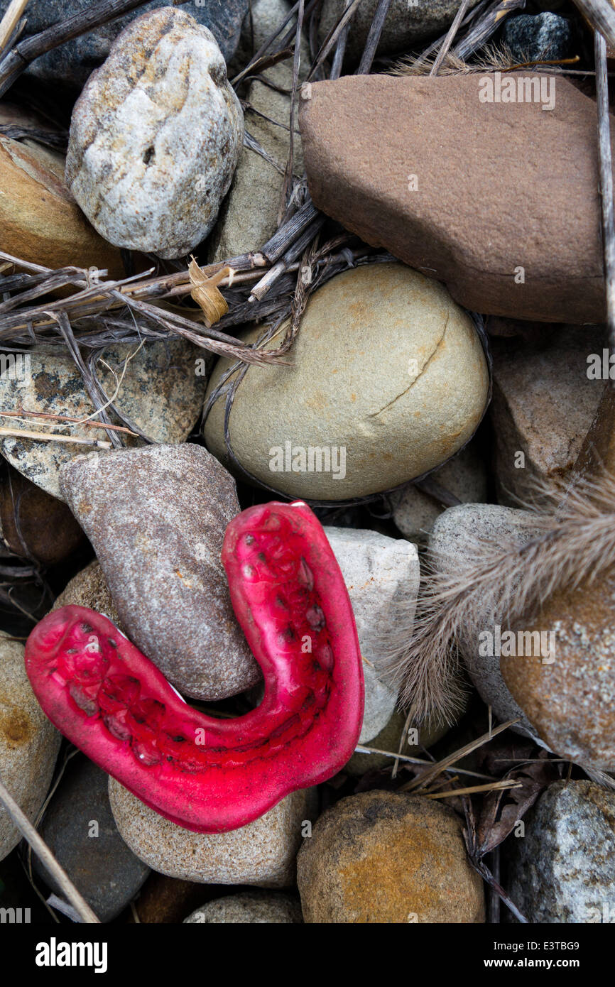 Mouthguard Stock Photos Mouthguard Stock Images Alamy
