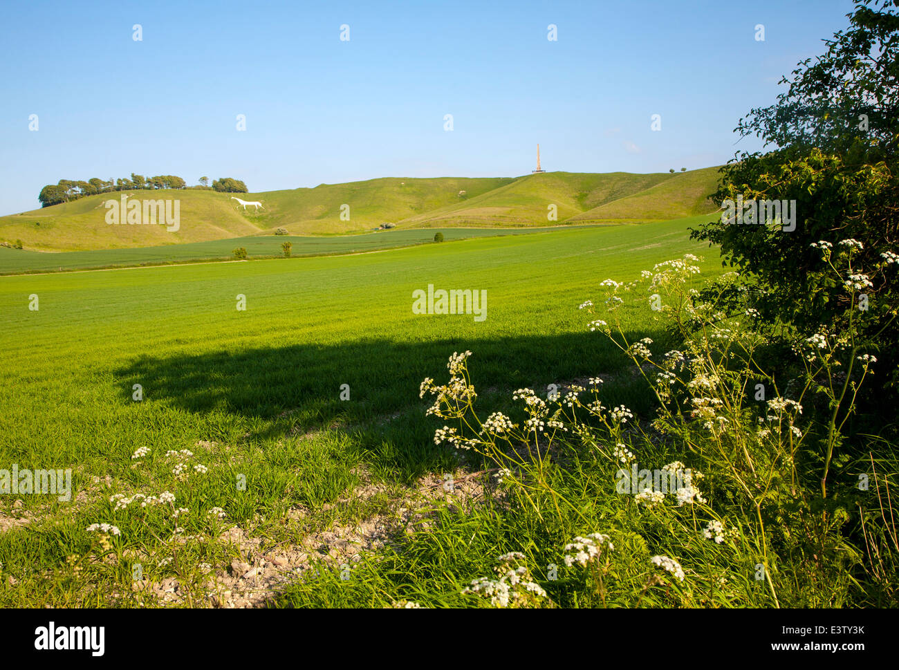 Scarp slope of White Horse on Cherhill Down and Lansdowne monument, Cherhill, Wiltshire, England - Stock Image