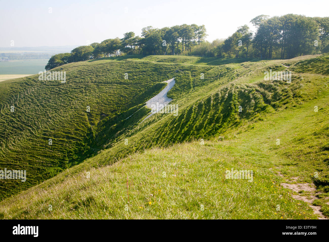 White horse in chalk scarp slope Cherhill, Wiltshire, England dating form 1780 - Stock Image