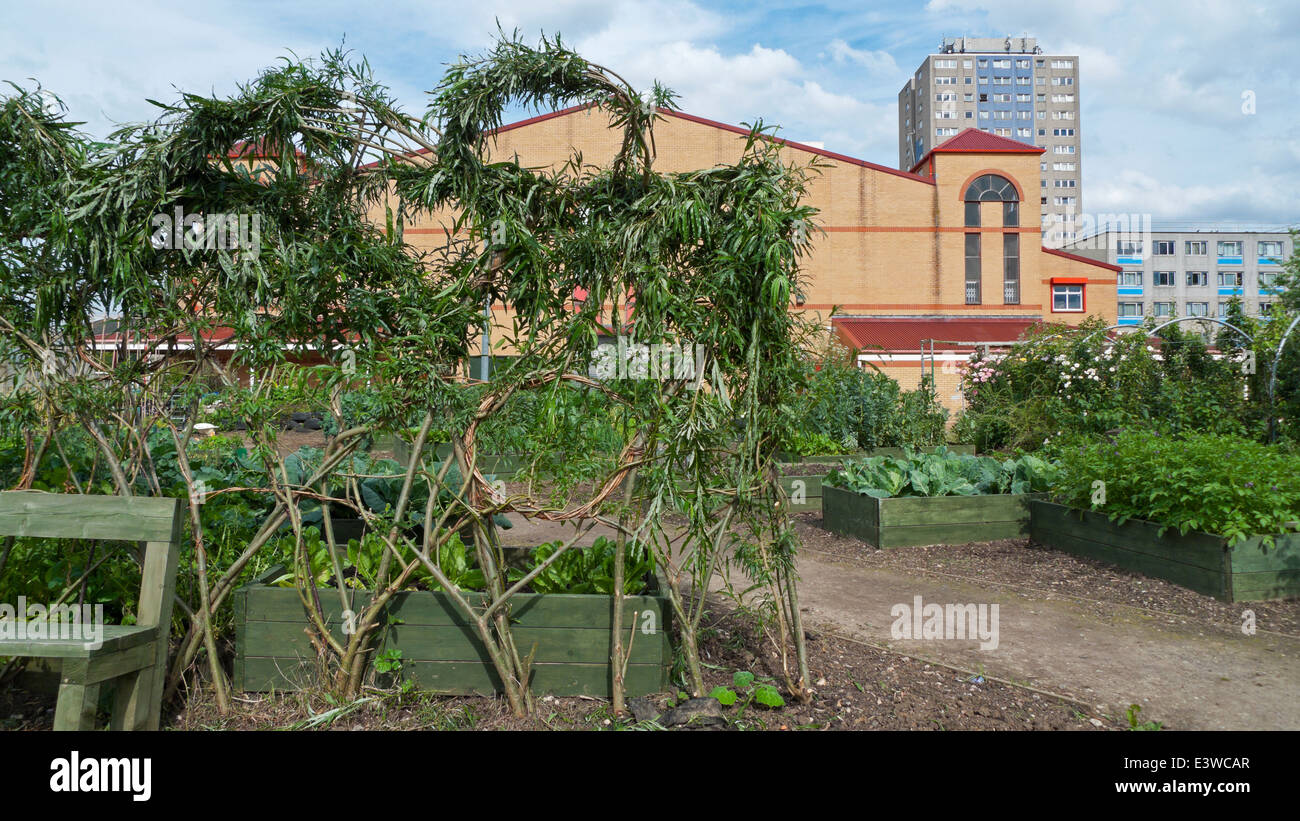 Willow stick support frame for climbing plants in community garden on Broadwater Farm Estate Tottenham London   - Stock Image
