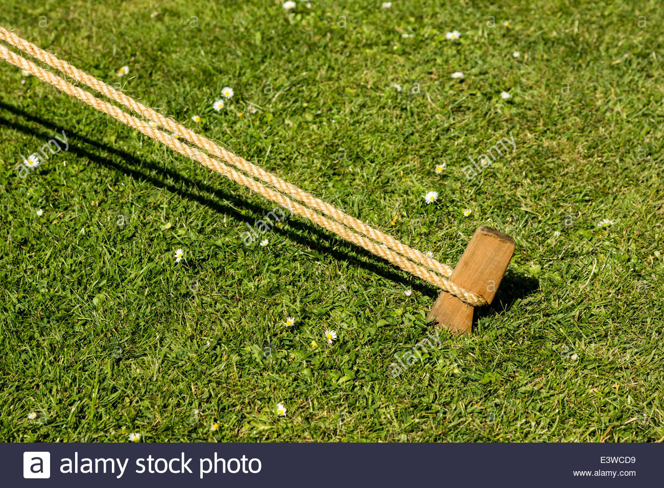 Wooden Tent Peg Stock Photo 71244021 Alamy