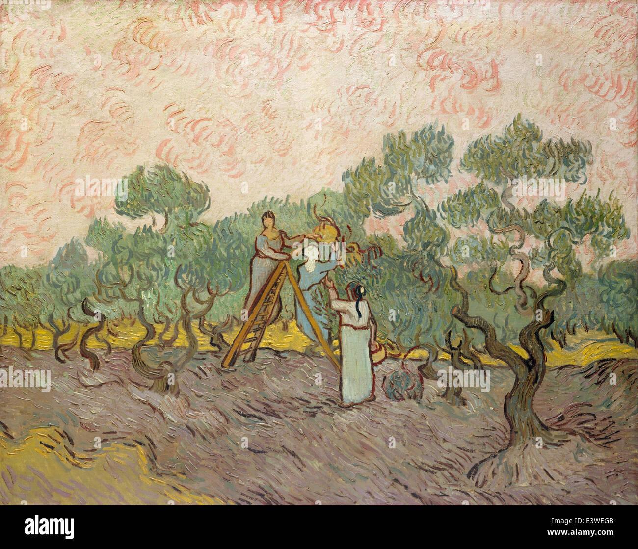 Vincent van Gogh - Women Picking Olives - 1889 - Stock Image