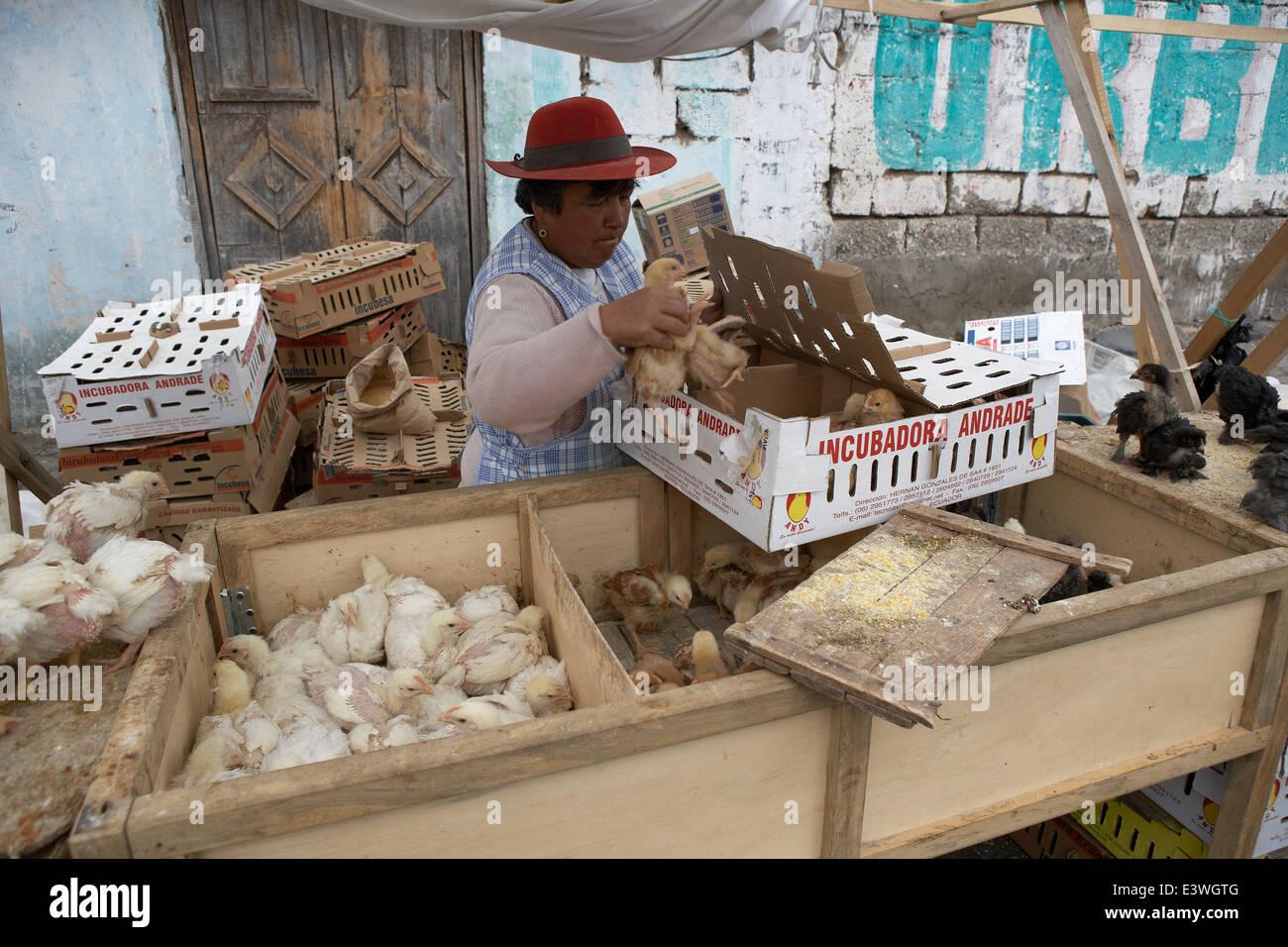 Woman selling live chickens at the Saquisili Market, Ecuador - Stock Image