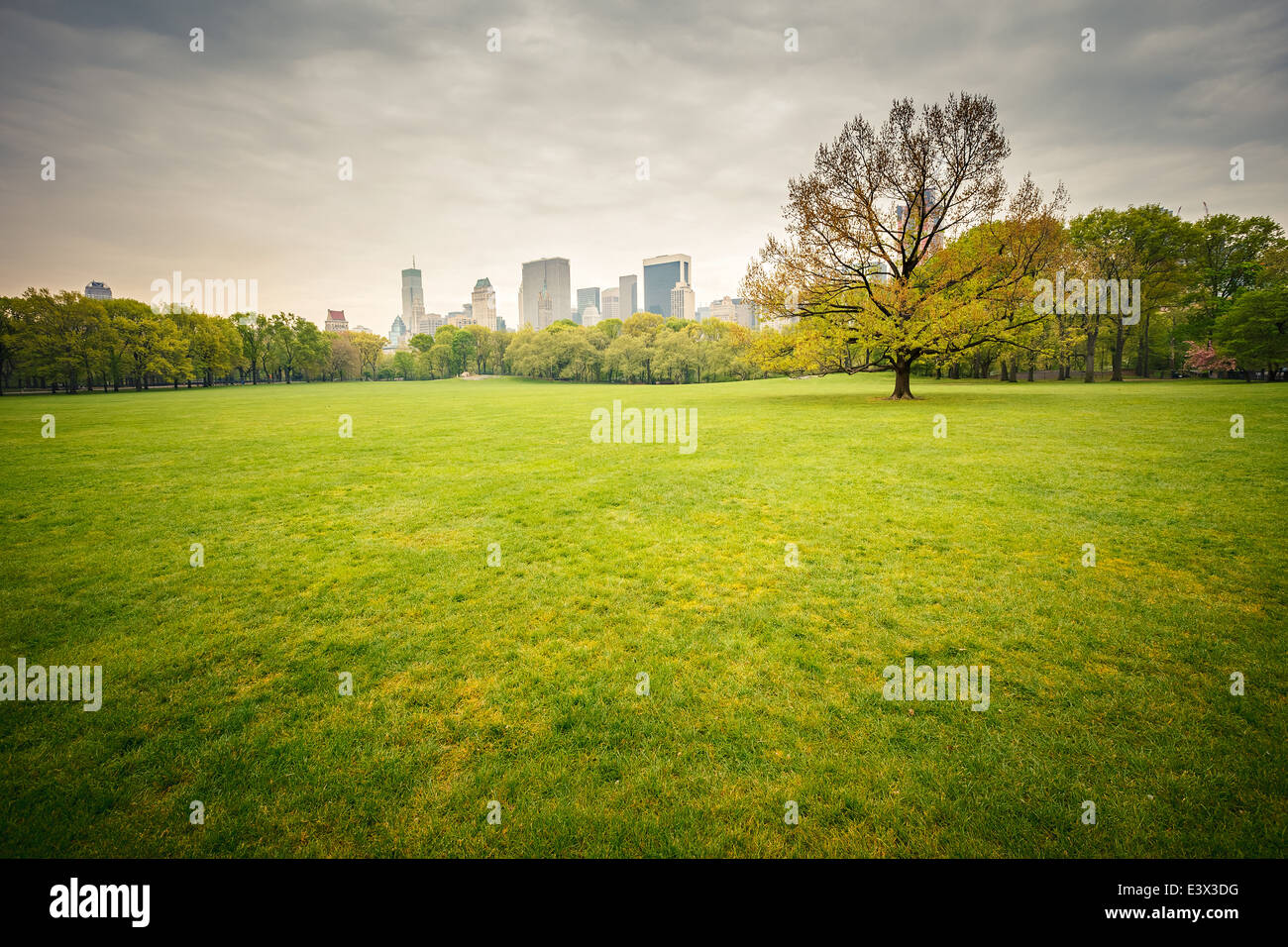 Central park at rainy day - Stock Image