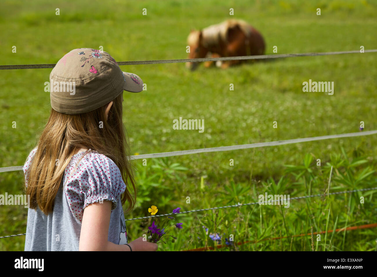 A girl watching a horse in pasture in summer - Stock Image