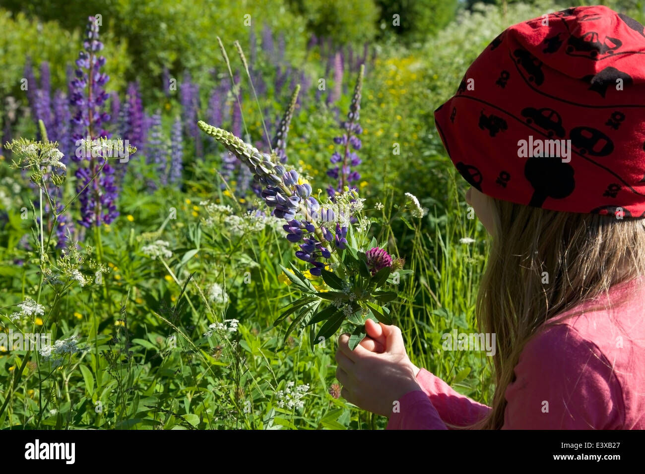 A bouquet of summer flowers in girl's hands in summer in Finland - Stock Image