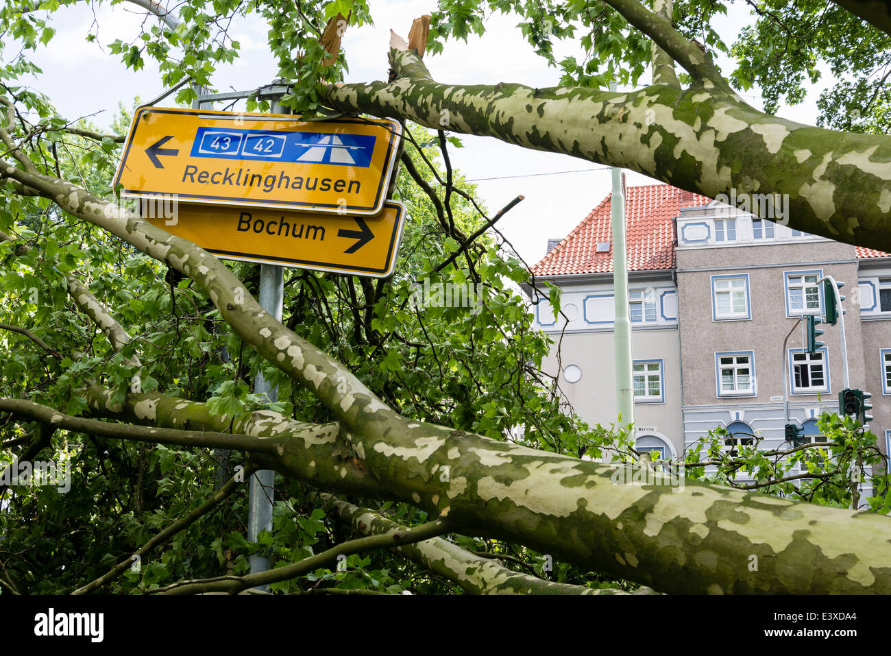 A fallen tree lay on a traffic sign in Herne, Ruhr area, Western Germany after the severe storm front Ela Stock Photo