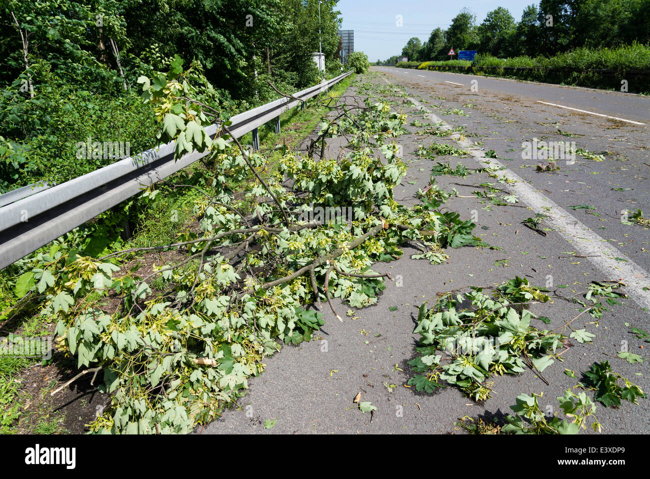 Fallen branches lay on the A43 motorway in Herne, Ruhr area, Western Germany, after the severe storm front Ela - Stock Image