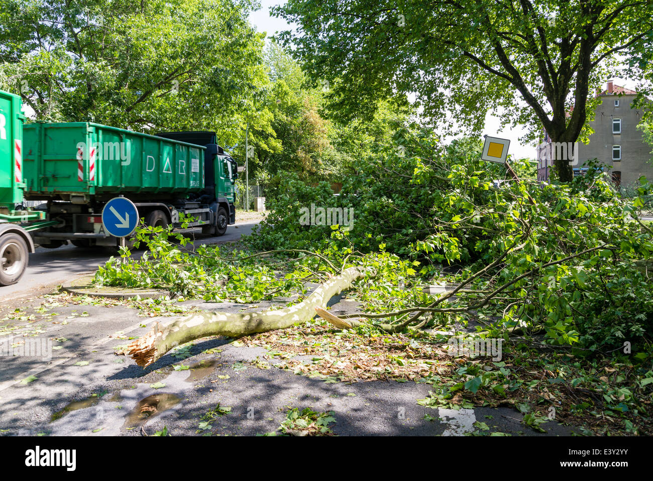 A fallen part of a tree lay on a street in Herne, Ruhr area, Western Germany, after the severe storm front Ela - Stock Image