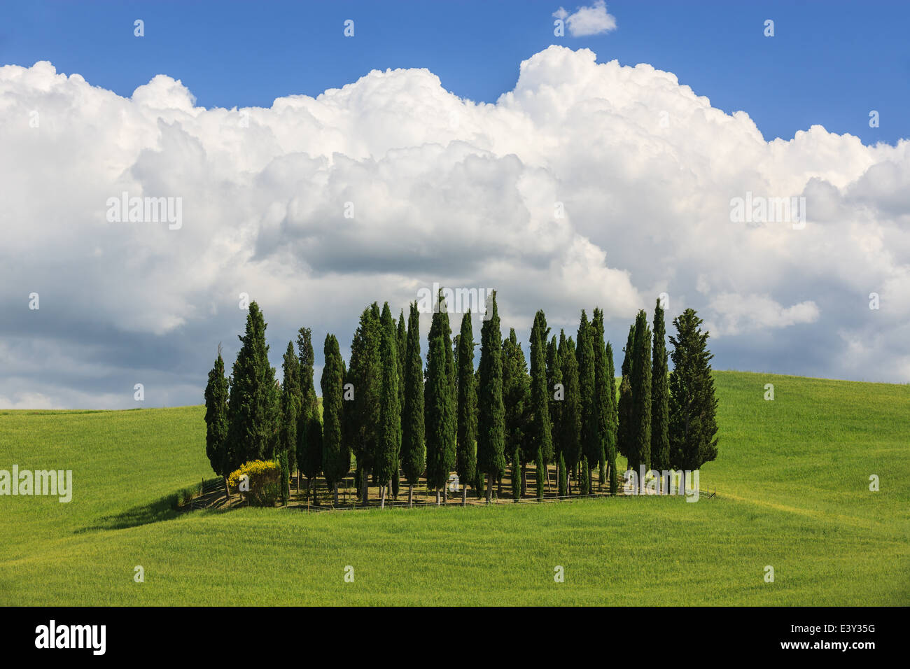 Circle of Cypress trees near Torrenieri in the heart of the Tuscany, Italy - Stock Image