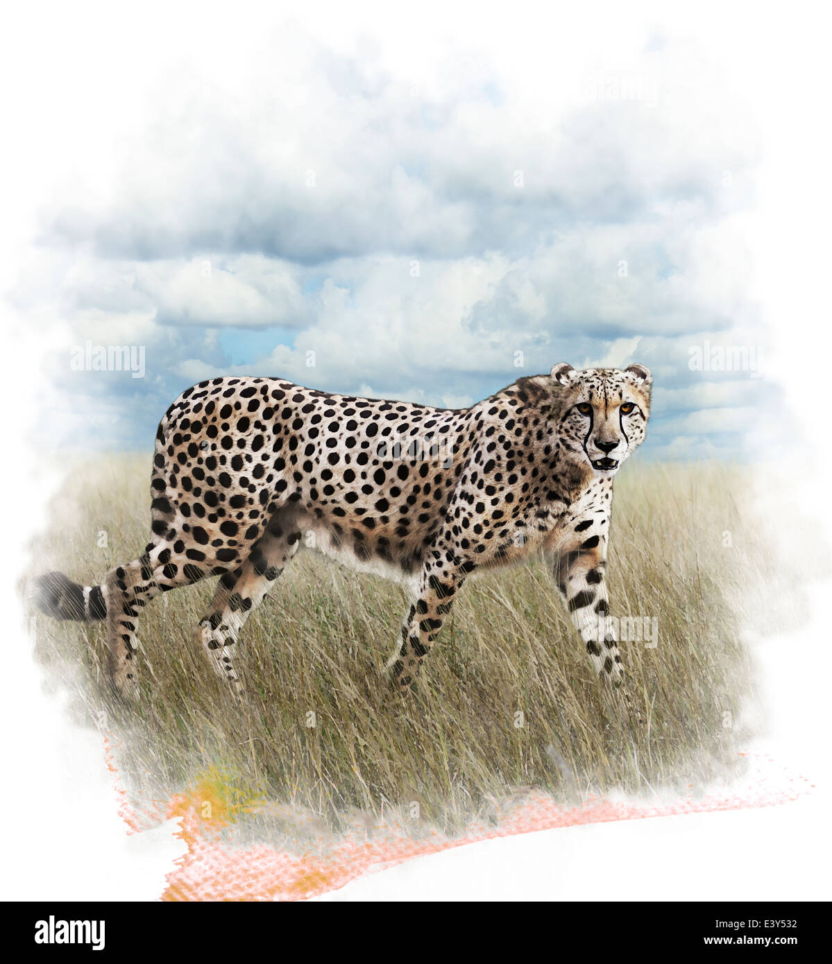 Watercolor Digital Painting Of Walking Cheetah - Stock Image