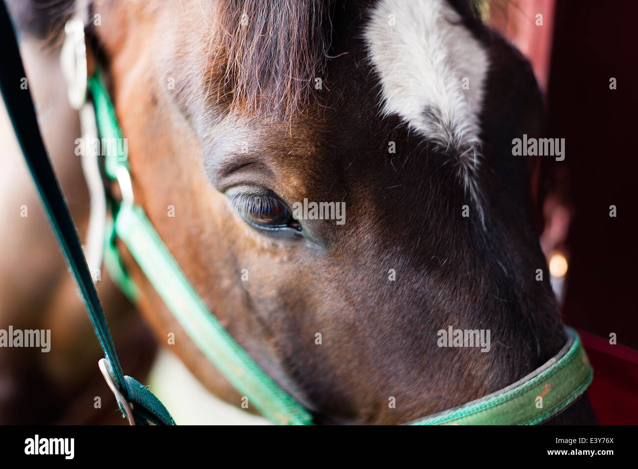 Close up of horse - Stock Image