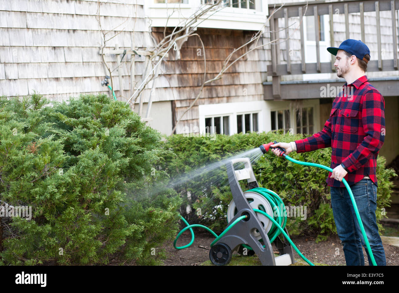 Mid adult man watering plants with hosepipe in garden - Stock Image
