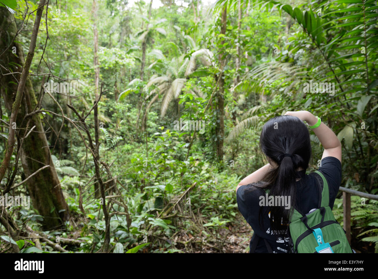 Girl, teen, Asian, taking a photo of an old-growth rainforest, Chilamate, Costa Rica - Stock Image
