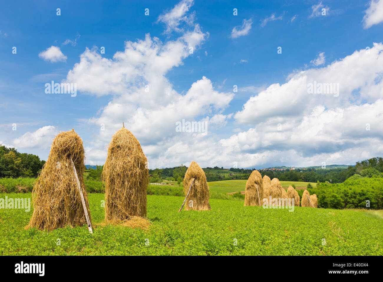Traditional hay stacks on the field. - Stock Image